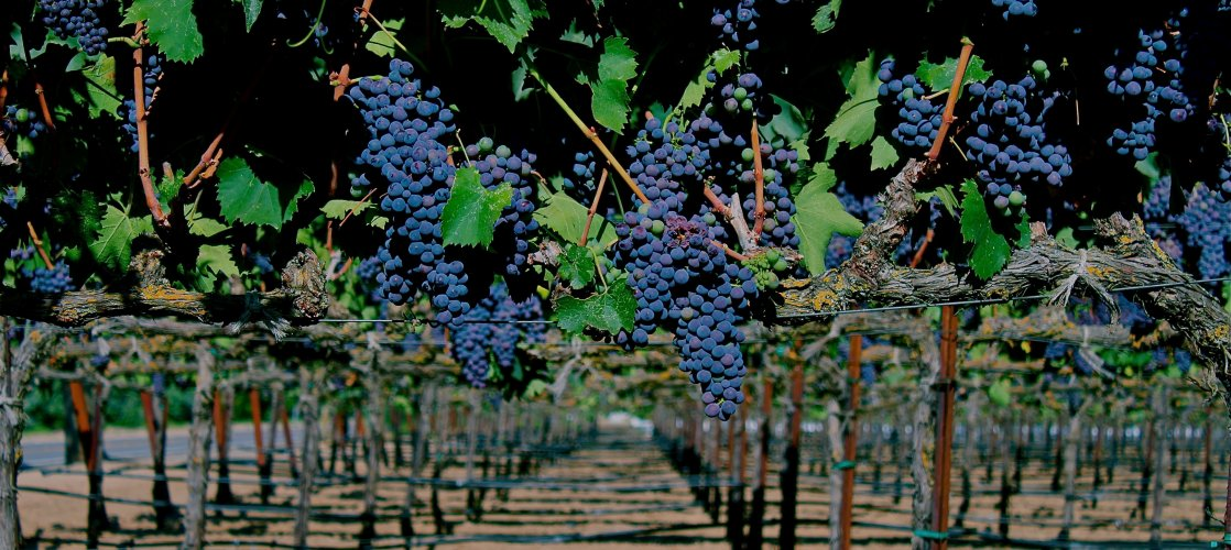 Enjoy over 80 wineries in the greater Stockton area